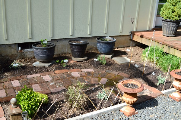 Herb Garden Replant In Progress - An Oregon Cottage