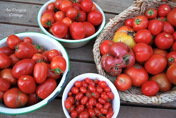 How to Plant Tomatoes and Have Them Thrive - An Oregon Cottage