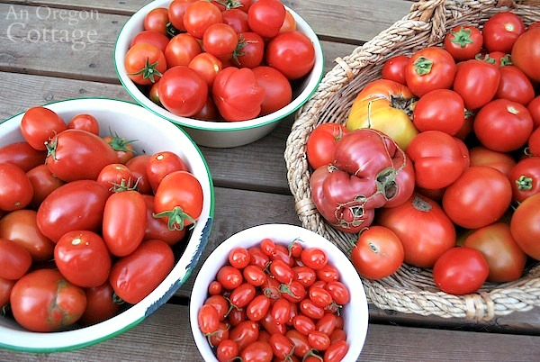 How to Plant Tomatoes and Have Them Thrive