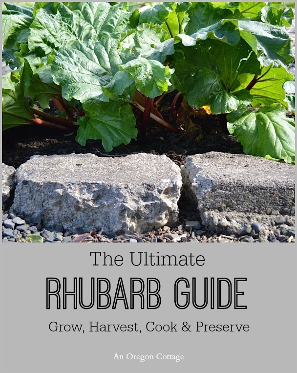 The Ultimate Rhubarb Guide image with rhubarb plant