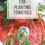 Tips-Tricks for planting tomatoes