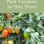 best ways to plant tomatoes
