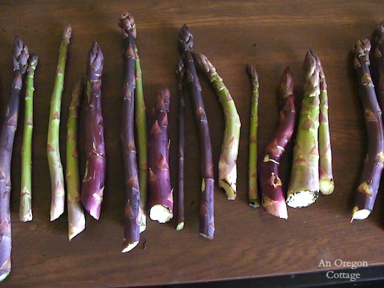 Thick and thin asparagus - An Oregon Cottage
