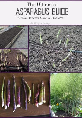 Ultimate Asparagus Guide: Grow, Harvest, Cook & Preserve