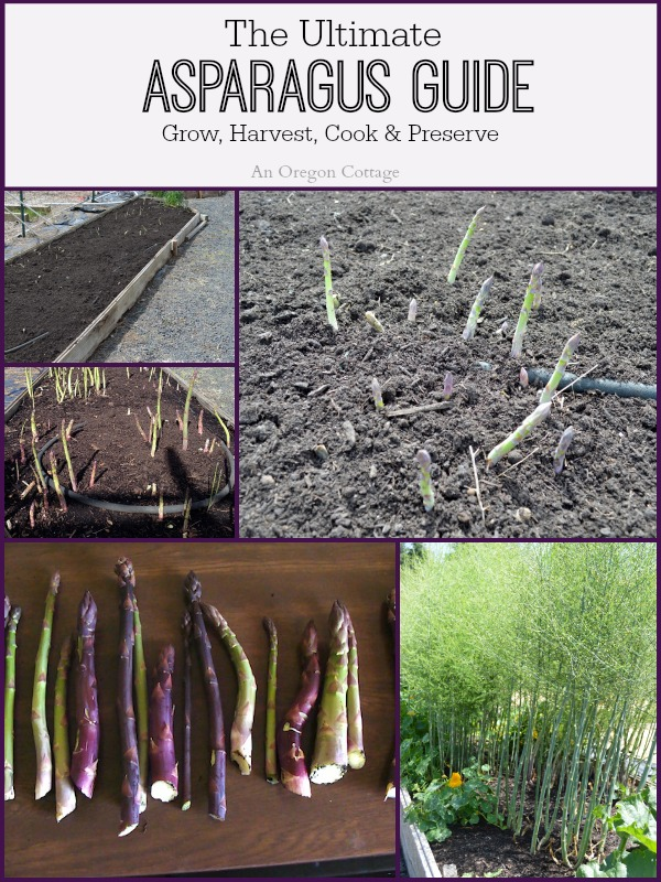 Ultimate Asparagus Guide