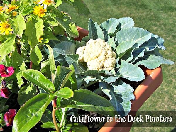 Potager deck garden via Olla-Podrida