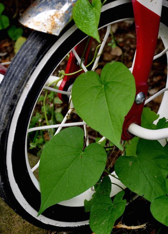Bindweed on bike via Frugal Little Bungalow