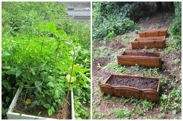 Guerrilla Gardening via Sprouts Gardening