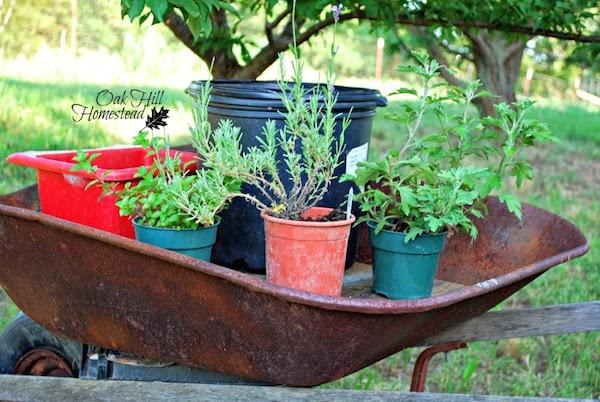 Herb Garden Wheelburrow via Oak Hill Homestead