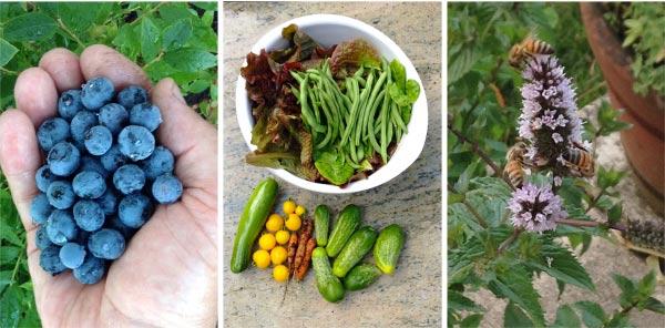 Frugal Family Home Garden Harvests via An Oregon Cottage