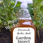 Homemade Garlic-Mint Natural Garden Insect Spray - An Oregon Cottage