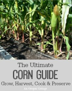 Ultimate Corn Guide