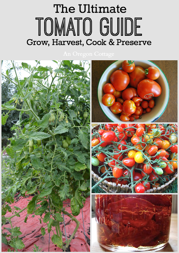 The Ultimate Tomato Guide to growing and cooking with tomatoes