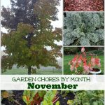 A list of garden chores for November from An Oregon Cottage