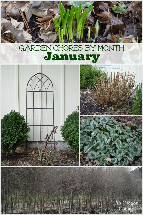 A list of garden chores for the month of January including fruits, vegetables, flowers, and borders.