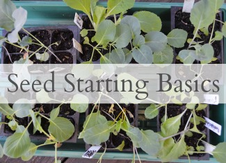 Seed Starting Basics at An Oregon Cottage