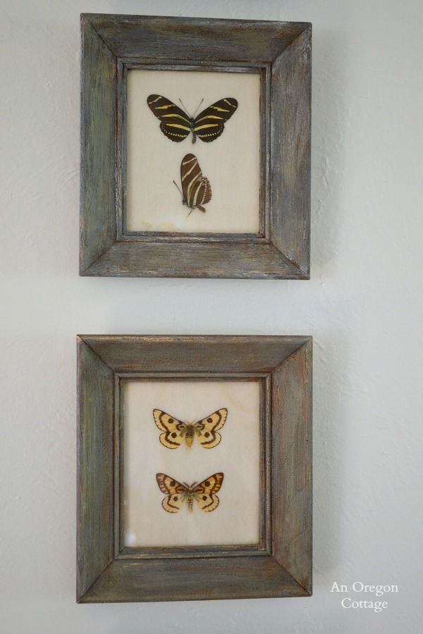 1950s Butterfly Specimen Frames After