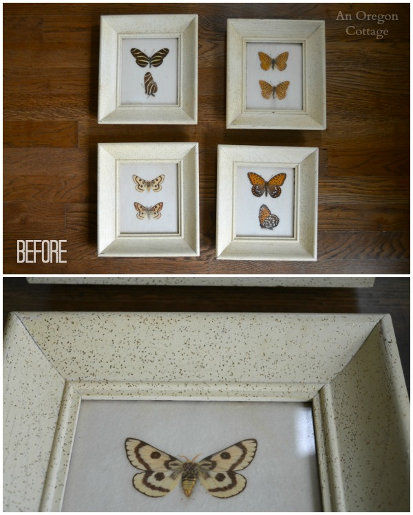 1950s Butterfly Specimens and detail before