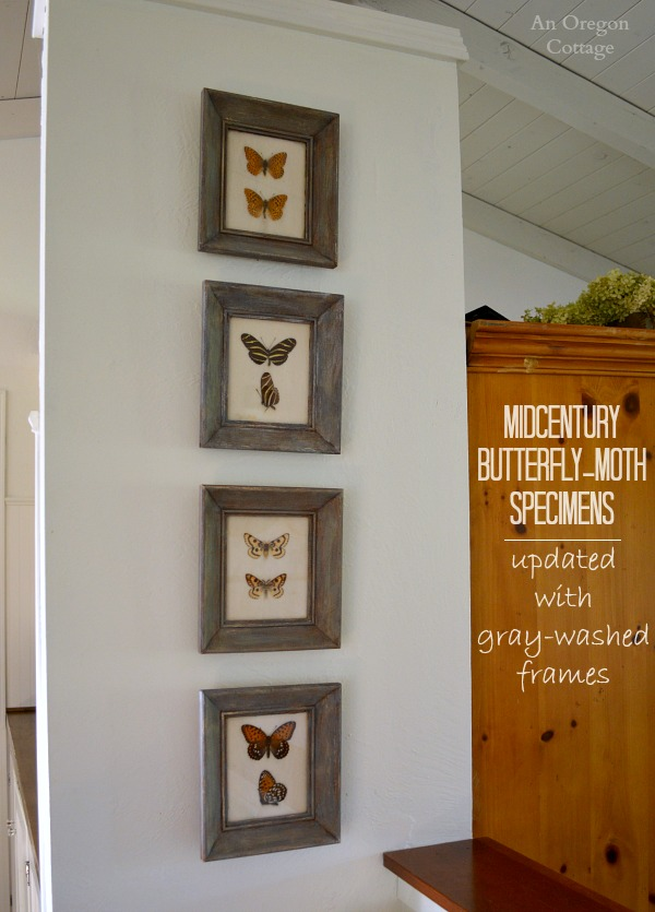 DIY Gray-Washed Frames for Midcentury Butterfly Specimens | An ...