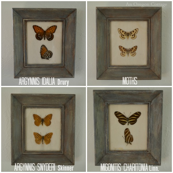 Midcentury Butterfly Specimens, Named