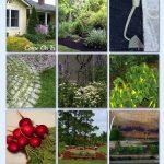 Organic Weed Control TIps via HomeTalk