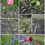 An Oregon Cottage's Garden 3-24-15