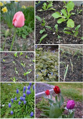 Tuesday Garden Party 3.24.15