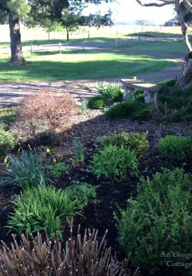 Early Spring Front Garden 2015