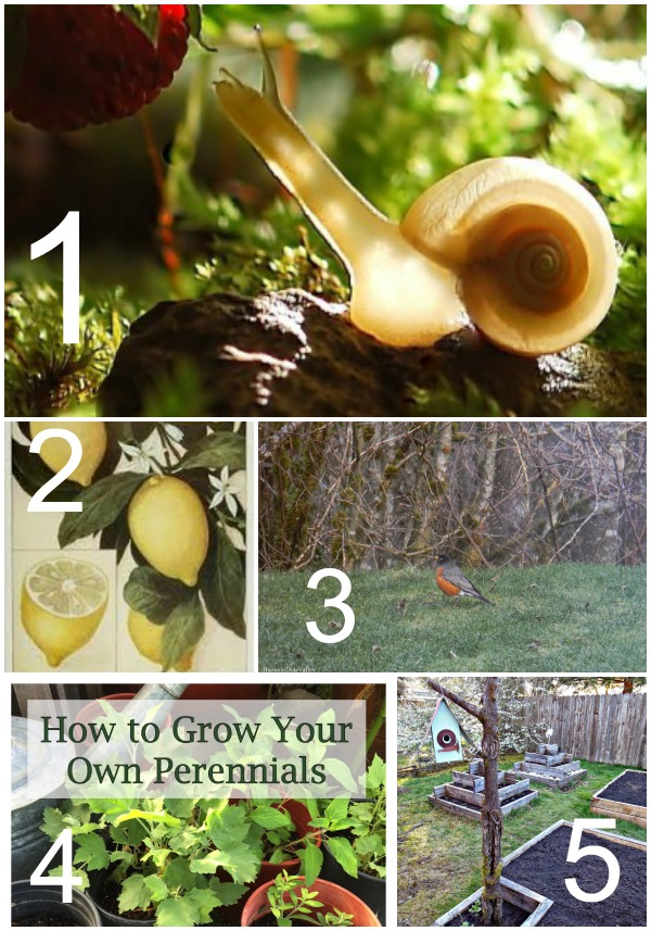 Tuesday Garden Party Featured Posts 3.17.2015