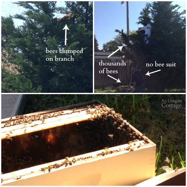 Collecting Bee Swarm
