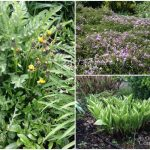 Early April Garden-Perennials and Weeds