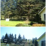 Front Yard Trees Before-and-After