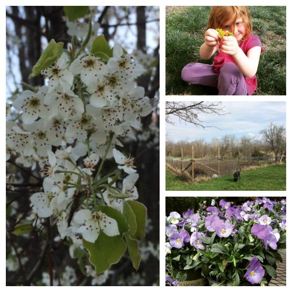 Spring in Central Missouri 4.7.15 #TGP