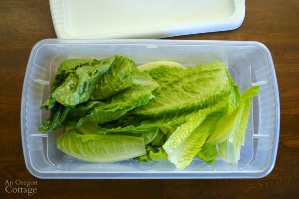 Storing Lettuce in a Plastic Bin keeps lettuce the best.