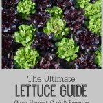 The Ultimate Lettuce Guide- Grow, Harvest, Cook & Preserve