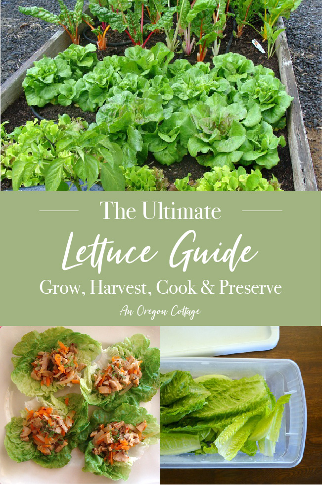 The Ultimate Lettuce Guide pin image