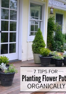 7 Tips for Planting Flower Pots Organically {That Thrive all Season}