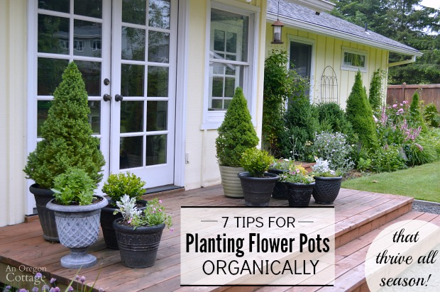 How to plant containers organically with 7 tips that will have them thriving all season!