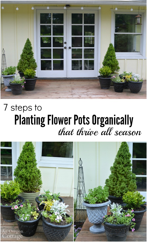 7 steps to planting flower pots organically that will thrive all season!