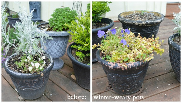 Last year's planters ready for a refresh!