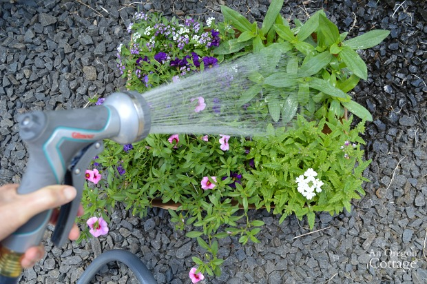 Tips for Planting Organic Flower Pots-Watering Flowers Before Planting is Biggest Tip for flowers that thrive