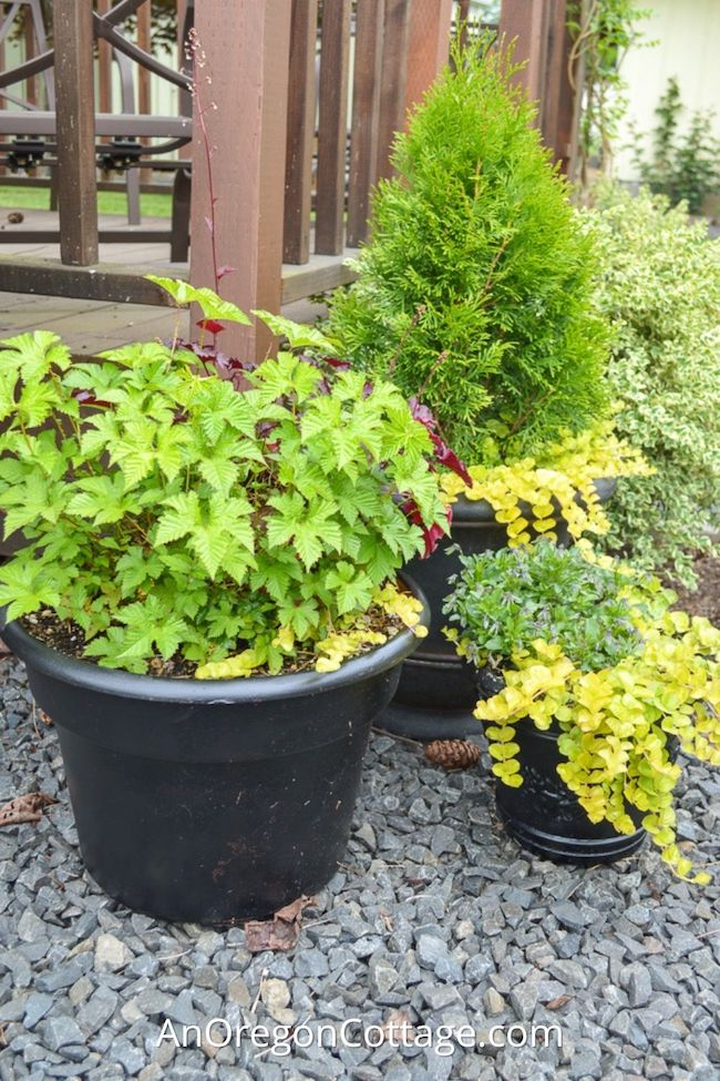 tips for flower pots that thrive_featured image