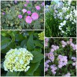 An Oregon Cottage June Flowers