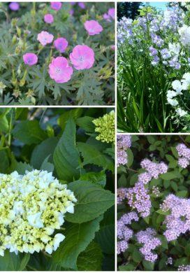 Tuesday Garden Party 6.16.15