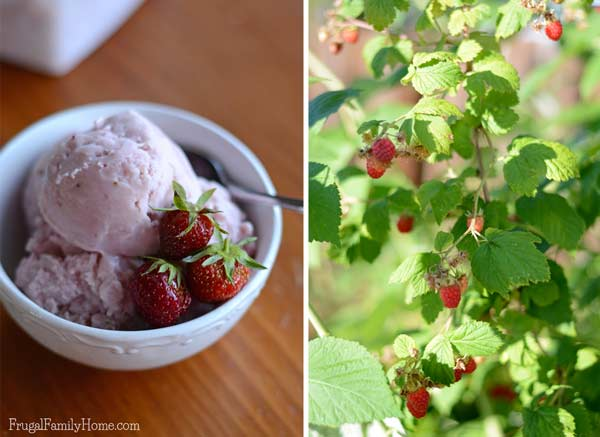 Berries and Ice Cream via Frugal Family Home
