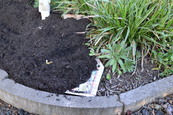 Cover All Garden Beds with Paper and Mulch
