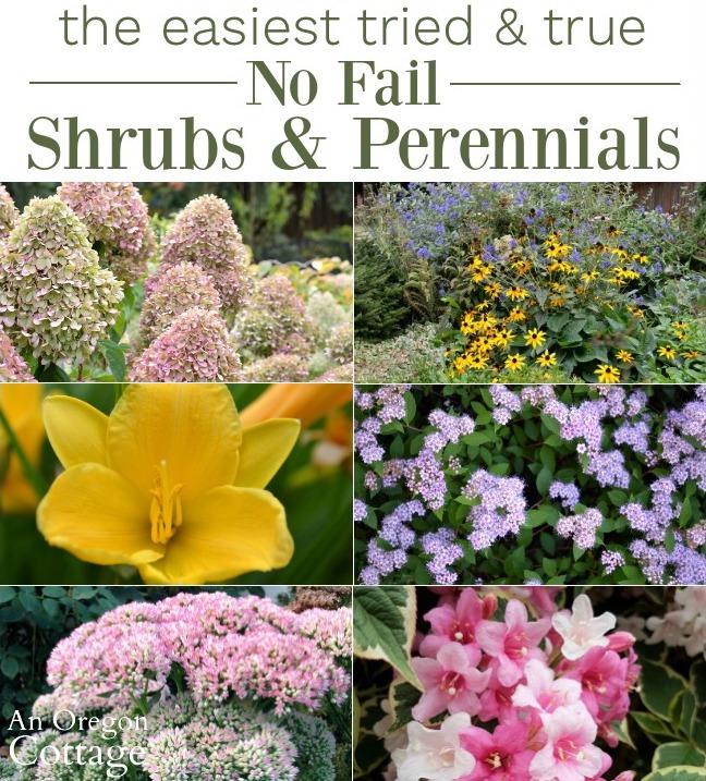 easy care shrubs and perennials for the garden
