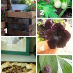 6.23.15 Tuesday Garden Party Features