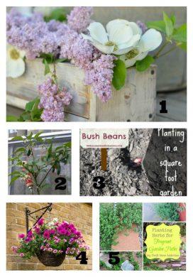 Tuesday Garden Party 6.09.15