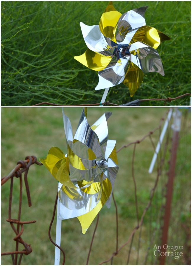 Use mylar pinwheels to scare birds away from berries